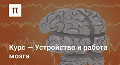 Курс - Устройство работы мозга